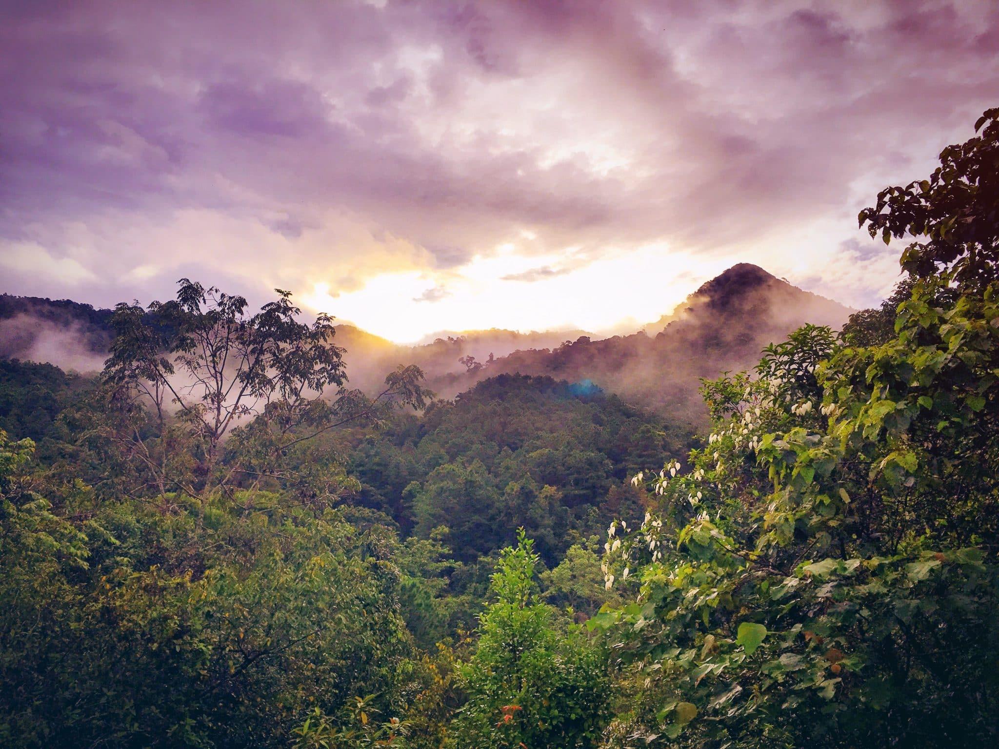 Rainforest morning